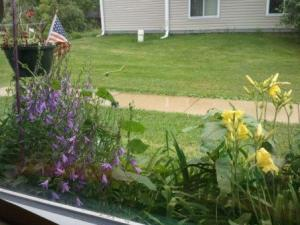 Sitting here watching the flowers grow when I should be writing