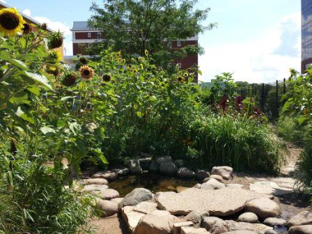 Rooftop garden at the Madison Childrens Museum