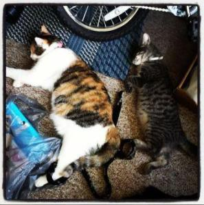 picture of sleeping cats