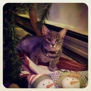 My cat making merry in the christmas tree