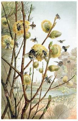 bees in spring illustration